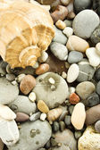 Background of rocks and sea shells — Stock Photo