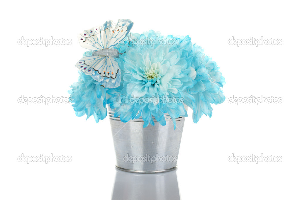 Close-up of a bouquet of chrysanthemums in a blue iron bucket. A bunch of flowers sitting on a blue butterfly. Isolated  Stock Photo #5895270