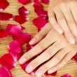 Hands on rose petals — Stock Photo #6112405