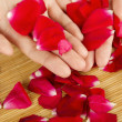 Hands on rose petals — Stock Photo #6116168