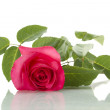 Single Red Rose — Stock Photo #6157770