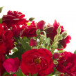 Red roses — Stock Photo #6256513