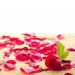 Red rose and petals — Stock Photo #6256821