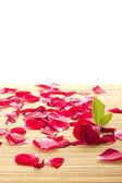 Red rose and petals — Stockfoto