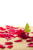 Red rose and petals — Foto Stock