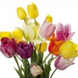 Tulip with water drops — Stock Photo
