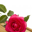 Red Rose — Stock Photo #6429454