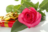 Red Rose, gift box — Stock Photo