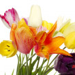 Tulips — Stock Photo #6587151