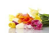 Tulpe mit wassertropfen — Stockfoto