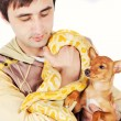 Royalty-Free Stock Photo: A man holding his pets - python and a puppy