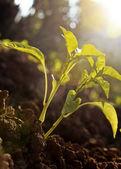 Small plant_new day — Stok fotoğraf