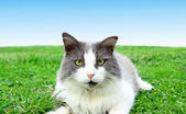 Cat playing on the grass close up — Stock Photo
