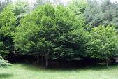 Green trees — Stock fotografie