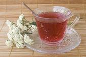 Achillea millefolium tea — Stock Photo