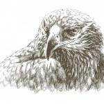 Eagle art — Stock Vector