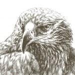 Eagle head isolated line art — Stock Vector