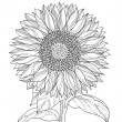 Sunflower drawing — Image vectorielle