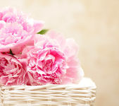 Peony flowers - background in the Victorian style — Stock Photo
