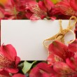 Red flowers and empty white card — Stock Photo