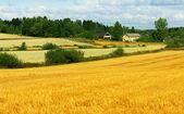 美丽的风景-字段、 农场和天空 — 图库照片