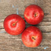 Red ripe apple — Stock Photo