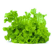 Folhas verdes alface isolado no fundo branco — Foto Stock