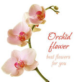 Orchid Flower - Beautiful Birthday Gift — Stock Photo