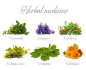 Herbal Medicine: chamomile, lavender, calendula, celandine and S — Stock Photo