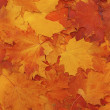 Bright colorful leaves - autumn background — Stock Photo