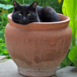 Stock Photo: Flowerpot black cat