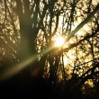 Sun beam shining through trees — Stock Photo #5399393