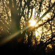 Sun beam shining through trees — Stock Photo