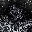 Winter night — Stock Photo #5399408
