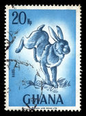 Rabbit vintage postage stamp — Stock Photo