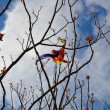 Kite tangled on tree branches — Stock Photo