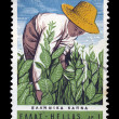Tobacco harvest vintage postage stamp — Stock Photo