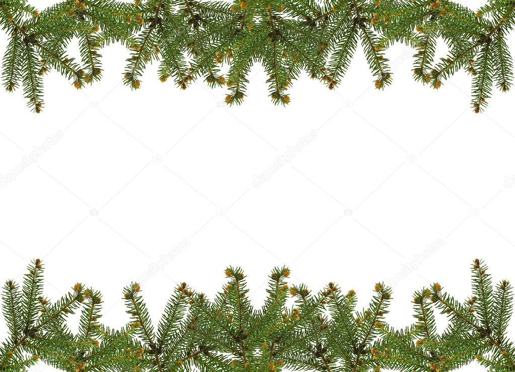 Frame of pine branches over white  Stock Photo #6276506