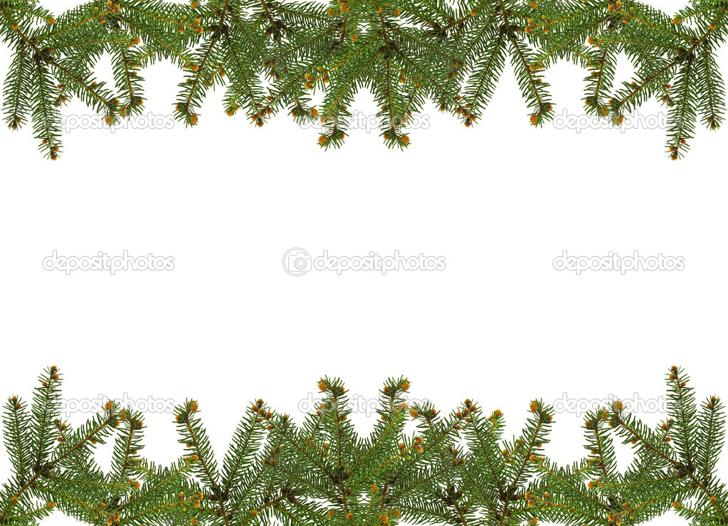 Frame of pine branches over white — Stok fotoğraf #6276506