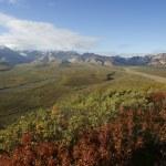 Denali landscape — Stock Photo