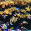 Aquarium with coral and colorful tropical fish — Foto Stock