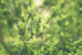 Branches of the tree with the young spring leaves — Stock Photo