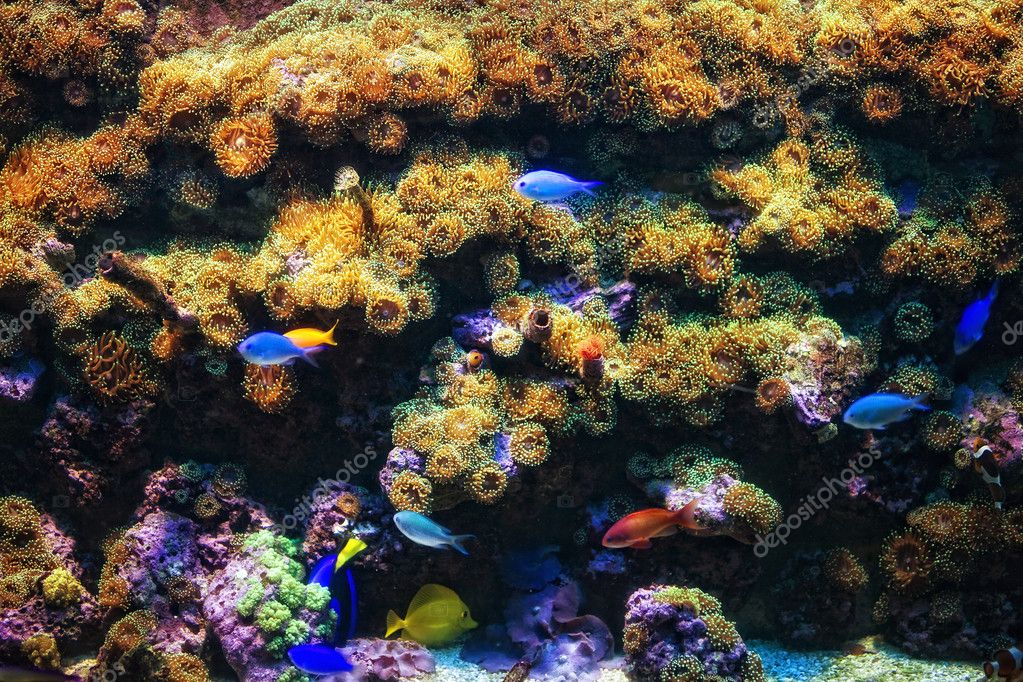 Aquarium With Coral And Colorful Tropical Fish Stock