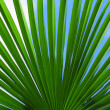 Stock Photo: The leaves of palm tree