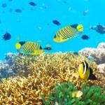 onderwater panorama — Stockfoto