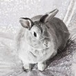 Rabbit - Foto Stock