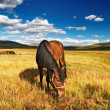 Grazing horse - Stock Photo