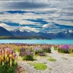 Lake Tekapo, New Zealand — Stock Photo #5819207