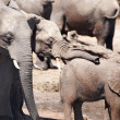 Elephants at watering - Foto Stock