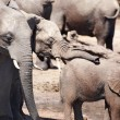 Elephants at watering - Stockfoto